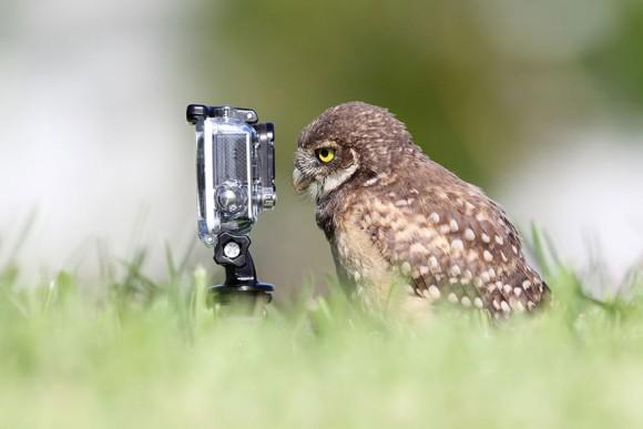 ほぼ、カメラの広告写真と化している。 RT @karapaia: カラパイア : はいはい、カメラカメラっと。カメラに慣れきってしまった動物たちの面白画像特集 http://t.co/xLrf2l1gLy http://t.co/NiXj4350jO