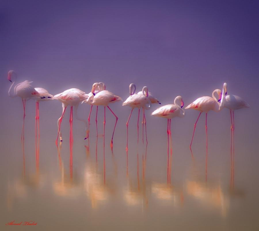 Dream by Ahmedsth #Photography #Nature http://t.co/Sq1BAxsB4v RT @Team_Viken @MarildaGodoy