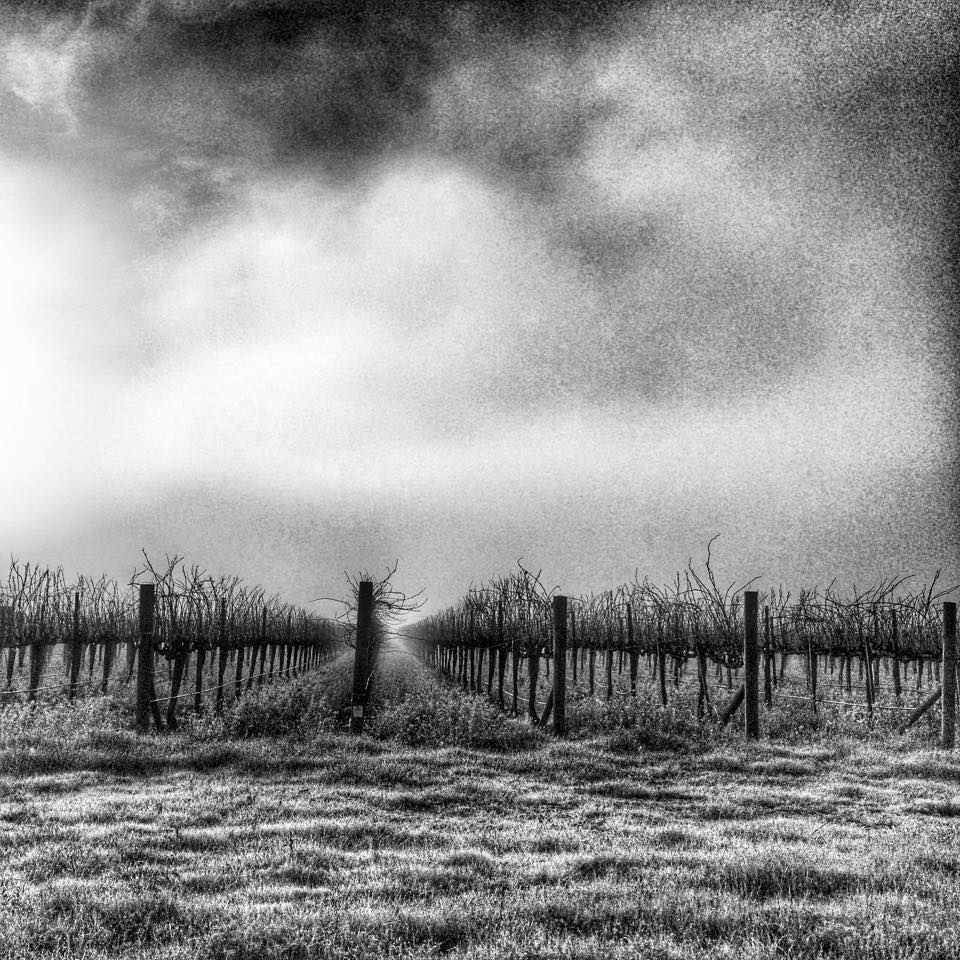 Our @VinoPix captured the morning fog in Napa along the way to Freemark Abbey. http://t.co/YSS2LwZf6a