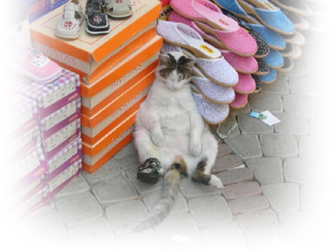 """냥생뭐있냥..~@gimseung: 신발 한짝은 어디다 잃어버렸냥?! http://t.co/DFIQE0xkwc"""""""