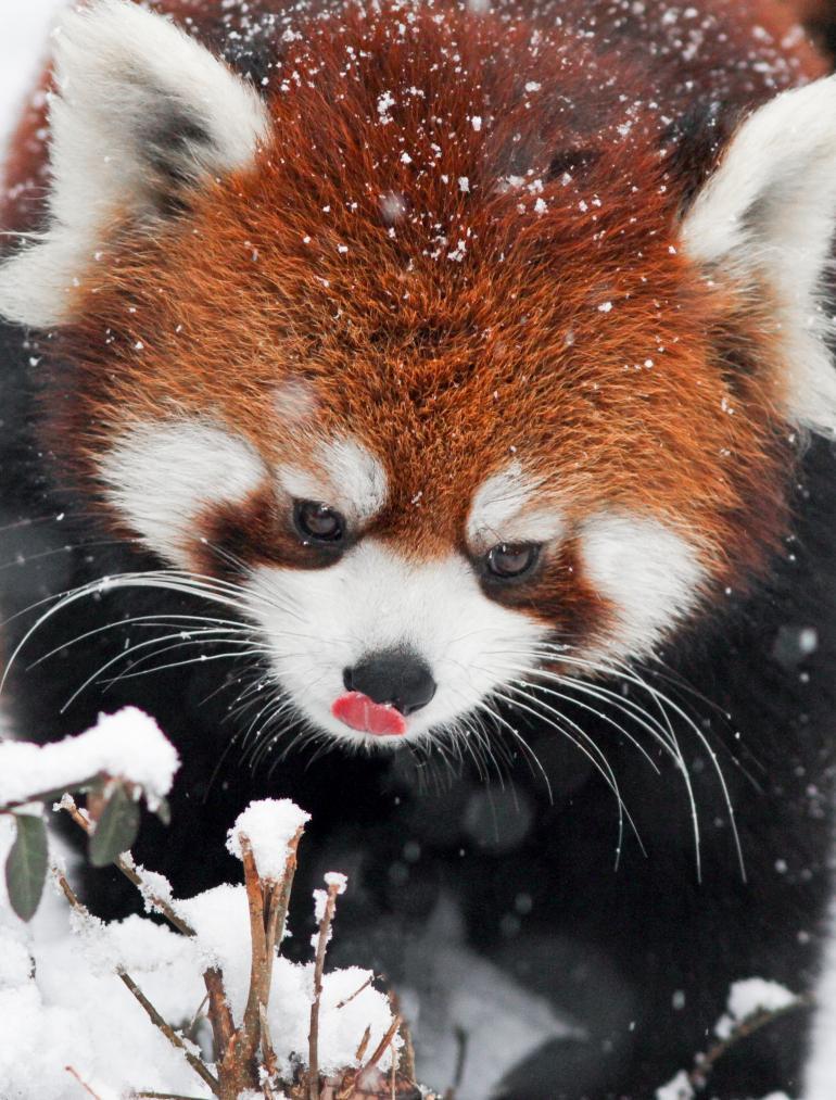 Mmmmm, love the taste of January snowflakes!! http://t.co/d2epHYa5Bt