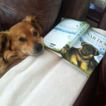 "The club ""mascot"" Rumble passing the winter away with some lite reading,not long now!!.#cricketfamily http://t.co/KDP4lrkXW5"