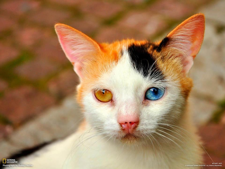 This is genetic deformation in cat! http://t.co/WFpTuH7SBc