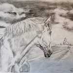 Dont leave me! #horses  #equine @mumtokitsi @BhamDonkeys @HorseHour @CoopersHill1  @GalwayGaillimh #galway #ireland http://t.co/bisRlFiBkU