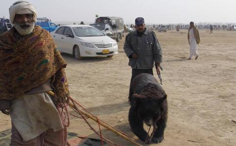3 more bears rescued by our local partners in Pakistan from the brutality of bear baiting. http://t.co/gZpdEnHKHX http://t.co/jzr24AI8Bj