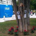 Fresh flowers planted around tree on Syntagma where pensioner Dimitris Christoulas shot himself in 12. #ekloges2015 http://t.co/pQuKAkfHYE