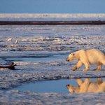 BREAKING Obama admin to propose new protections for Arctic refuge, Alaska GOP declares war http://t.co/Jwv2OGhcfY http://t.co/UUGsaU7Pod