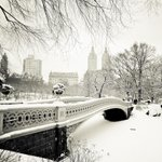 Central Park #NewYorkCity in various blizzards (MANY pics & book info: http://t.co/iLYxe7oSpr ) #nyc #photography http://t.co/AnIpktwjEF