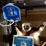 Congrats Coach K on 1000 wins from all your lemur fans! #Coach1K #theresonly1K http://t.co/OWzboDFuaJ