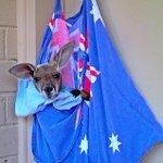 Happy Australia Day from The Kangaroo Sanctuary in #AliceSprings #NTaustralia http://t.co/7xJxefASeD