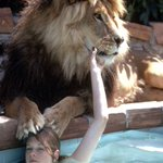 Teenaged Melanie Griffith at home with her oversized pet, Neil the Lion Photo: Michael Rougier http://t.co/YsqTCNsc6n