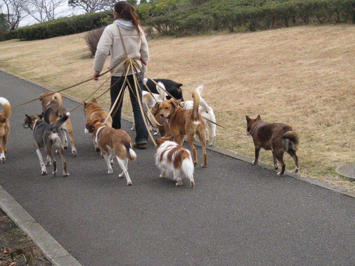湘南国際村で出会った犬の散歩の謎が解けた。保健所の犬のようだ。犬・猫を救う会 とか犬・猫の里親募集等の活動をしている方達らしいね。詳しいことはわからないが、新しい家族待つ被災犬や捨て犬等で大型、小型、ミックス犬など顔ぶれは毎度様々だ。 http://t.co/17hUdEDkaK