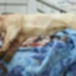 포항의 한 사찰에서 기르던 진돗개를 쇠파이프로 마구 때려 물의를 빚은 이웃주민이 처벌을 받게 됐습니다. 혐의는 동물보호법 위반과 폭력행위 등 처벌에 관한 법률 위반입니다.http://t.co/t73fSjitB6 http://t.co/fhhNZMJDSi