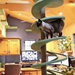 버려진 고양이를 위해 자기 집을 캣타워로 만든 남자(동영상) http://t.co/yALI6bGBCR http://t.co/PvdEi1DzDZ