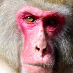 일본 동물원에서 미남 선거를 실시했다. 1위부터 3위까지의 얼굴을 공개한다. (사진) http://t.co/Msc5YLGSIS http://t.co/T5vprJEuKk