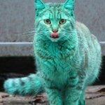 Болгарский бирюзовый кот Было установлено, что кот стал зеленым,после того как заснул в остатках синтетической краски http://t.co/YVPWfGUWOX