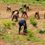 President Goodluck Jonathan approves the release of N26 billion for the 2015 dry season farming, Min. of Agric states http://t.co/WKWisMhsoE