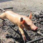 URGENT : IMAGE CHOC: Découverte du corps de Jean-Marie Le Pen après un incendie à son domicile. http://t.co/K2EqnQzx4P
