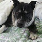 Dogs home makes urgent appeal for bedding and coats to help keep homeless pups warm http://t.co/Hk7R5gjyDT http://t.co/ZwYNHcIxZG