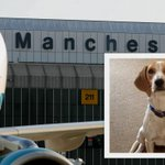 Bob the beagle-cross who went missing at Manchester Airport is found safe and well http://t.co/nAf2yANQ8d http://t.co/LAULAMByQ5