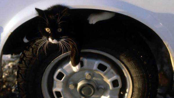 Cats often sleep under cars. Please check and knock loudly on your hood before starting it! #Juno #blizzardof2015 http://t.co/iGV8bmr7Fv