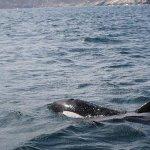 Orcas fazem festa para turistas em águas de Arraial do Cabo, no RJ http://t.co/D6Y8GYUioL #G1 http://t.co/nz5c7hsy6F