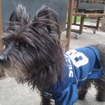Turns out there are 4-legged #Seahawks fans in Phoenix during #SB49 too. Meet JD! http://t.co/PnTvwkXqdI