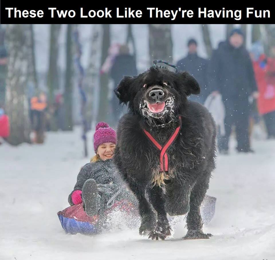 This is hilarious! Love that look on the face: http://t.co/SugEreD1m9