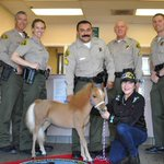 Hell yes. RT @NBCLA: Meet the mini threapy horse joining the LA County Sheriffs Department http://t.co/1OP8sqWAbN http://t.co/qhwx76xsP6