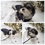 @PerezHilton, Im surviving #Blizzard2015 how bout you? #tinkerbellethedog #Snowpocalypse http://t.co/mHFLUNePfa