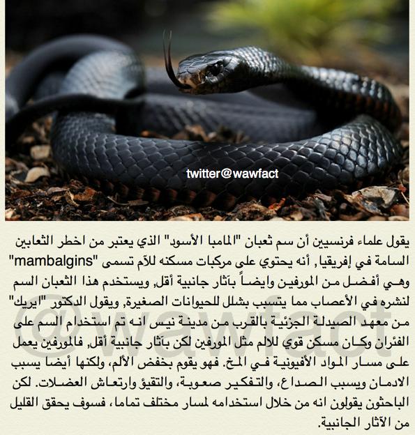 علماء فرنسيين اكتشفوا أن سم احد الثعابين الفتاكة, أفضل من مسكن المورفين http://t.co/siBwyQnUzT