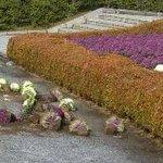 【なぜ…】広島「平和記念公園」で花壇が荒らされる http://t.co/aGXYKiOuET 引き抜かれた一部のハボタンは、数字の「15」に見える形に並べられ、花壇前の路上に置かれていた。 http://t.co/IXg8XqOnbT