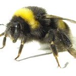 There is a bit of bbuuuuzzz in the union today! Its our free Bee Keeping Talk today at 5pm in the SU Opps Centre. http://t.co/Soyy0r5Ih6