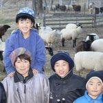 """【ブログ】全国でも数少ない""""羊で生計を立てる""""羊牧場、その生活の様子とは http://t.co/FxNj6lNi41 http://t.co/4XWQk2PcBo"""