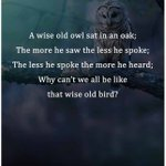 The wise owl!