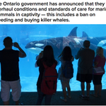 Ontario Is Banning The Breeding And Buying Of Orcas In Captivity http://t.co/KVEFx28ZUn http://t.co/qRPJZNuVGv
