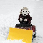 Snow removal service available. Will plow driveway for 3 treats and a belly rub #Snowmageddon2015 http://t.co/P6U3nwAAjy