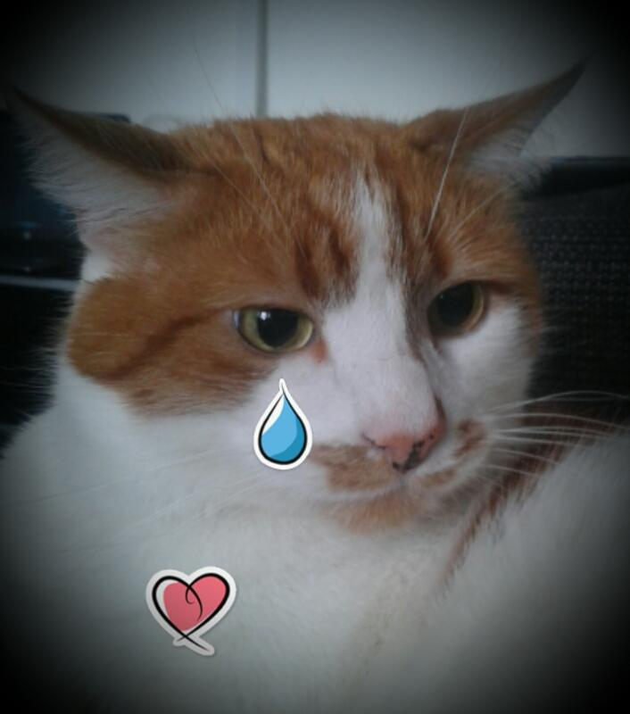 "RT @rockythetvcat: Broken hearts shed tears ""Rocky Stephens"" Sadly Missed By All Who Love & Adore Him :'( #rockythetvcat R.I.P. xx http://t.co/sNCs9pbInN"
