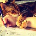 – Кот, отстань, мне нужно готовиться к экзаменам. – Нет. http://t.co/1FdMMpOx0Q
