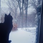 Juno the cat checking out Juno the storm. #Boston #JamaicaPlain #blizzardof2015 http://t.co/nwJvYTTyM0