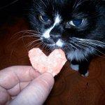 На 14 февраля вырежу сердечко из колбасы и подарю любимому коту. http://t.co/HaL7rbT8vD