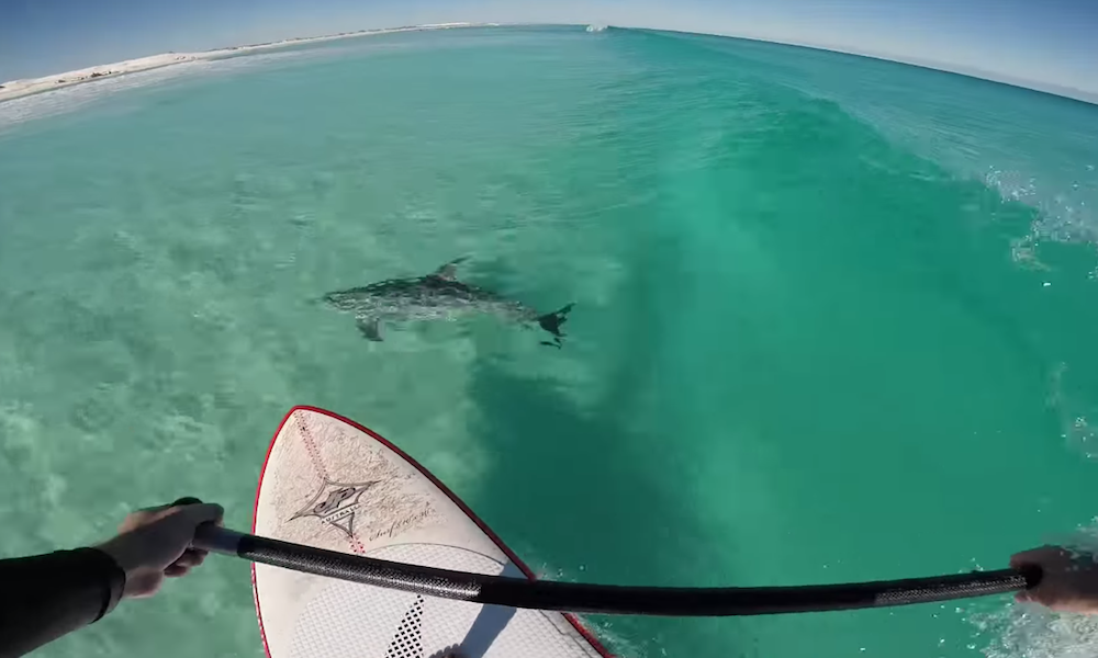 AMAZING video of dolphins surfing with a paddle boarder! Watch: http://t.co/F6pZLeAC27  #supconnect #paddleboarding http://t.co/JpKKmP6KFA