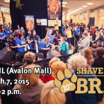 Were gearing up for our 10th Annual St. Johns Shave! Come to the Avalon Mall on March 7 from 12-2 p.m.! #Shave2015 http://t.co/jxZQldw2dB
