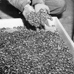Обручальные кольца, погибших в немецком концлагере. 1945 г. http://t.co/0RVX3k52k3