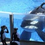 Ontario bans acquisition and sale of killer whales and other marine mammal restrictions http://t.co/RNfcHENMv5 http://t.co/V6USidFFrI