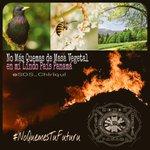 Yo quiero un país sin incendios forestales y tu? Dale RT! @SOS_Chiriqui http://t.co/vcyGCJ6cEL
