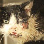 Gato atropelado aparece vivo cinco dias após dono enterrá-lo nos EUA http://t.co/P4fCOOuJEl #G1 http://t.co/5TjQi8hD4j