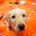 Tomorrow On TODAY: It's @WranglerTODAY Wednesday! + Kerri Russell on @TheAmericansFX & What happened at #SBMediaDay?