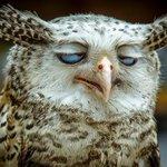 """""""Eu deveria ter ido dormir mais cedo ontem a noite."""" http://t.co/AKfOcLrb8p"""