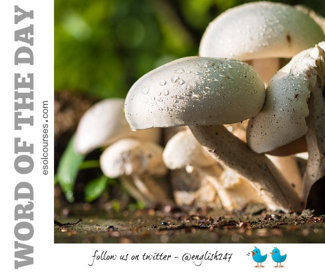 #English word of the day: mushroom. A type of fungi. Some mushrooms are edible; others are poisonous! #wotd #esl #efl http://t.co/QBMGR5Znfx